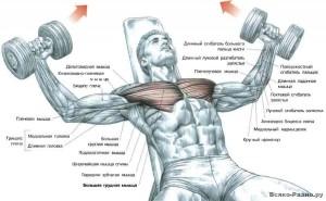 Как качать мышцы